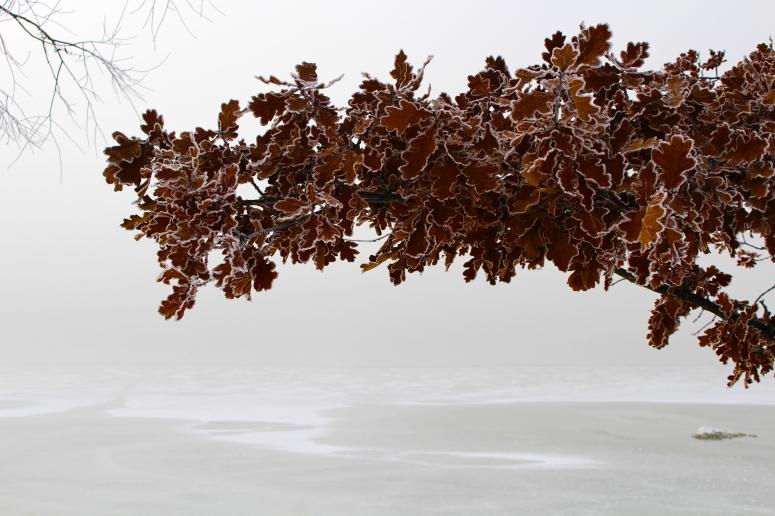 hoarfrost_frost_winter_leaves_lake